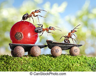 ants deliver red currant with trailer of sunflower seeds -...
