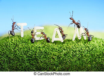 ants constructing word team with letters