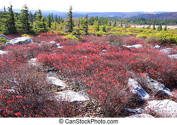 Dolly sods scenic area in West Virginia