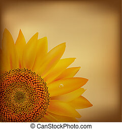 Vintage Paper With Sunflower, Vector Illustration