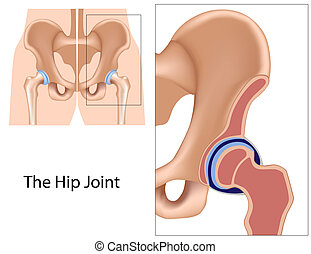 Hip joint structure, eps8