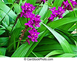 "botanical Garden of Peradeniya, Kandy,""Royal Botanical..."