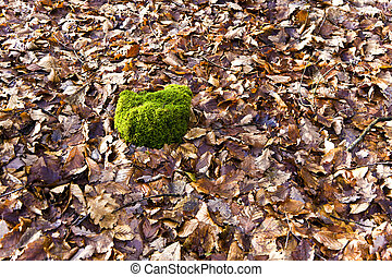 oak leaves in forest with stem of wood covered by moss