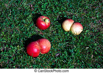 apples with interresting deformations give fantasy a chance...
