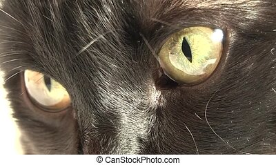 Domestic Cat, - housecat is not satisfied with life in...