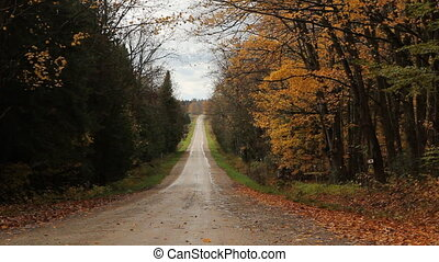 Autumn road Falling leaves - View of empty rural road in...