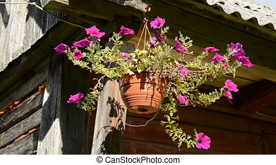 flowerpot with flowers and wind - flowerpot with flowers and...