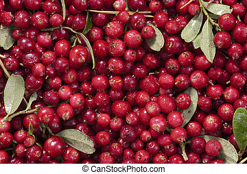 fresh cranberries as background
