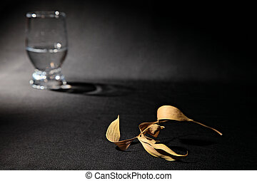 stillife - abstract stillife with dry leaf and glass with...
