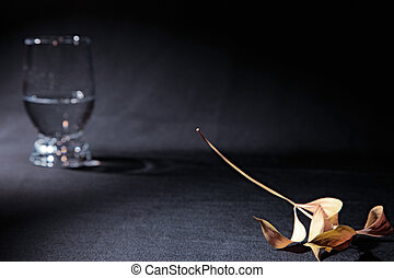 stilllife - abstract stillife with dry leaf and glass with...