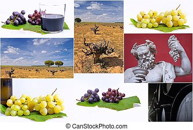 Harvest - Phases of wine