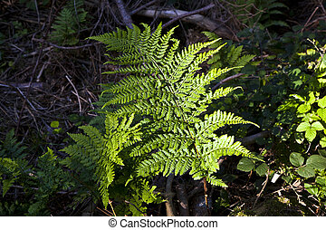 green fern in forest