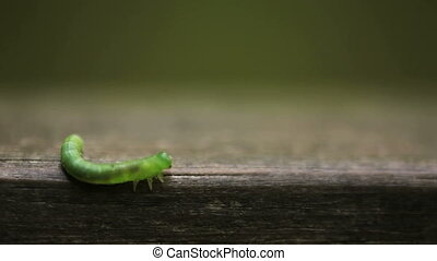 Caterpillar - Taken with a canon dos 5D mkII