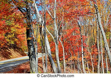 Autum drive - 2 - A drive along a highway filled with Autums...