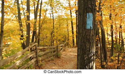 Hiking trail. - Mark on a tree indicates a hiking trail....