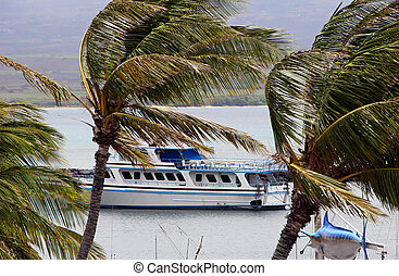 Tour Boat Behind Breezy Palm Trees on Ocean Maui Hawaii