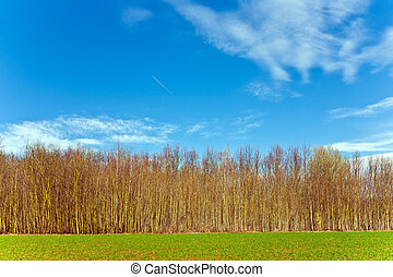 beautiful forest with field and blue sky