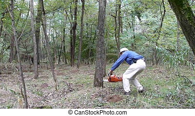 lumberjack with a chainsaw