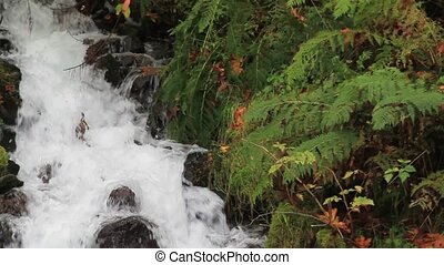 Wahkeena Falls on Columbia Highway - Wahkeena Falls along...