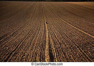 freshly plowed acre in beautiful light - freshly ploughed...