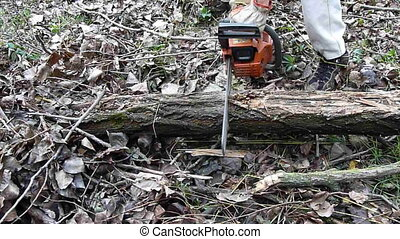 chainsaw close up - chainsaw cutting wood close up