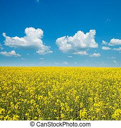 rapeseed flower detail on field