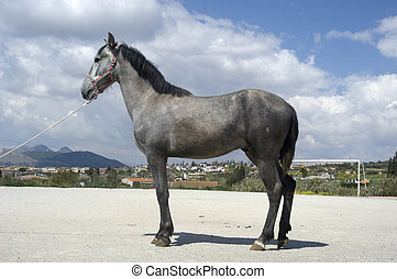 Young horse in the province of Granada