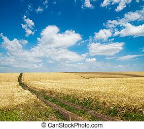 rural road inside field of wheat