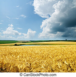 gold wheat under cloudy sky