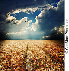 road in field with gold ears of wheat under hole in dramatic sky