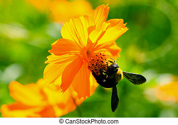 bee - The Little bee on a beautiful flower
