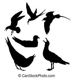 Ilustração, mar, gaivota, whi