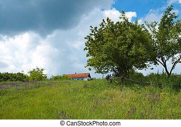 árvore, capim, verde, céu