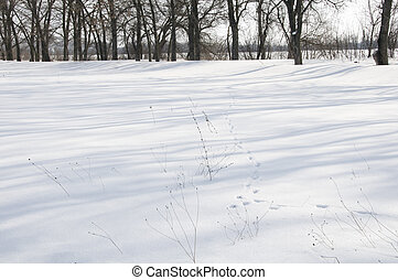 Snowy Lane - Hare foil on snow with silhouette of trees on...