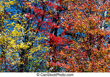 Yellow Red and Orange Fall Leaves