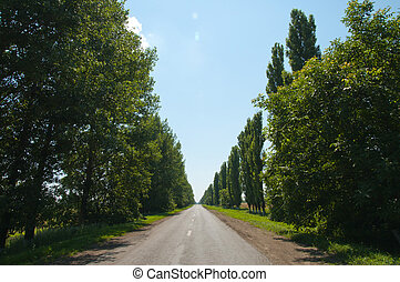 road in tree