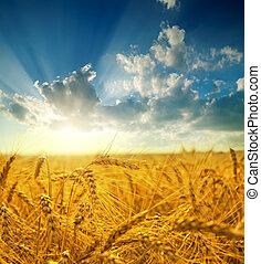 campo, oro, orejas, trigo, ocaso