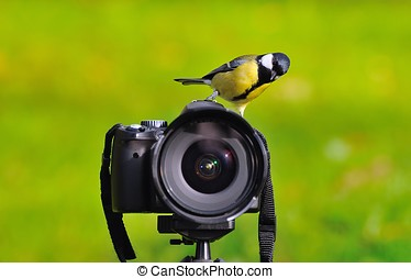 The photographer photographed. - Bird perched on a camera.