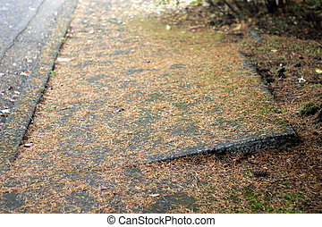Walkway Safety - Uneven sidewalk uplifted by a tree root...