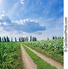 rural road in green field