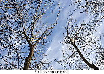 crown of trees with blue sky - crown of trees in forest with...