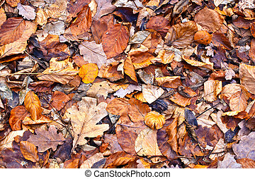 autumn leaves of trees in forest