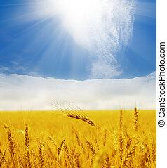 sun over golden field