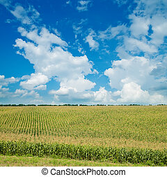 field with green maize under cloudy sky