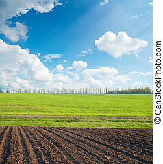 black and green field under cloudy sky