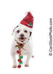 Festive Christmas puppy with jingle bells - An adorable...