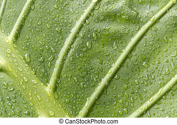 Green leaf - A green leaf with water droplets Marquise