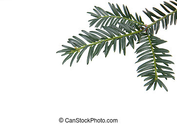 Branchlet of christmas tree in the corner isolated on white...