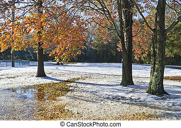 Autumn Winter Park - An early snowfall during Autumn at this...