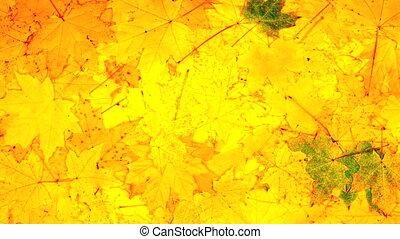 Autumn foliage. timelaps